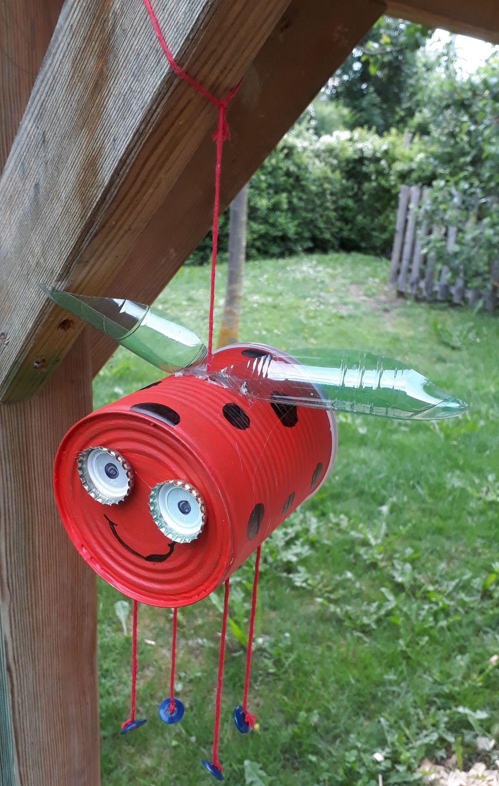Hübscher Marienkäfer im Garten - David (5)